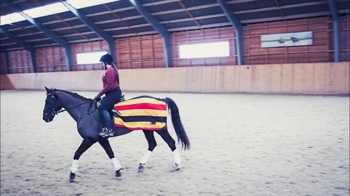 Planerar hästarnas pass